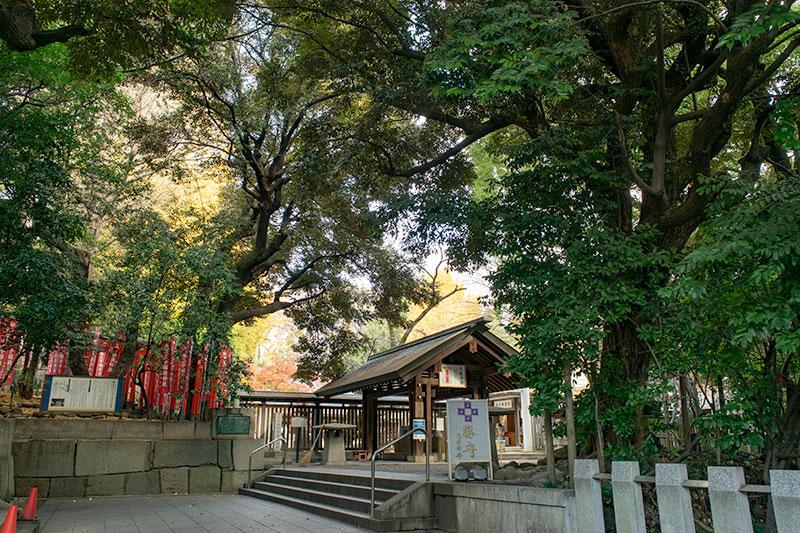 乃木神社参道