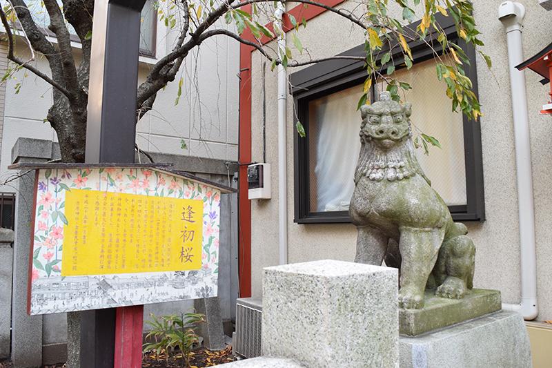 吉原神社の逢初桜