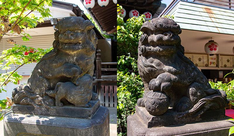 新井天神北野神社 拝殿の狛犬