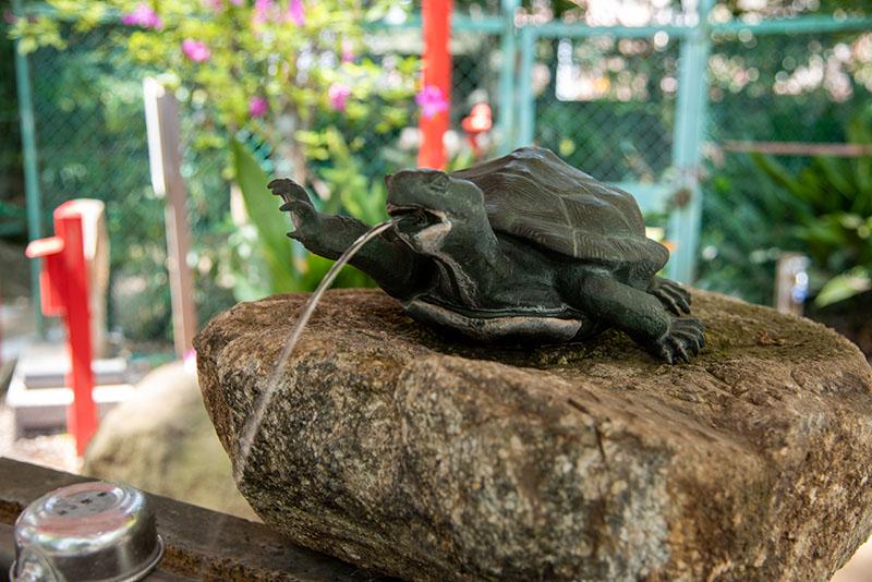 六所神社の手水舎の亀