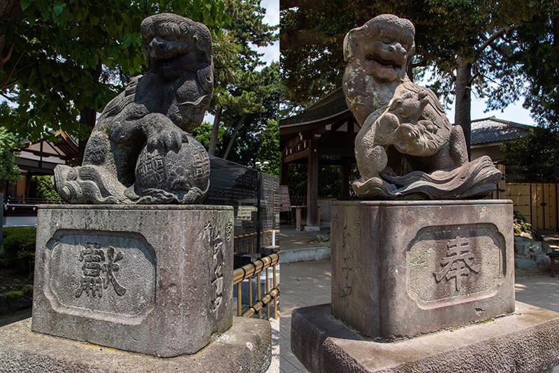 沼袋氷川神社 狛犬