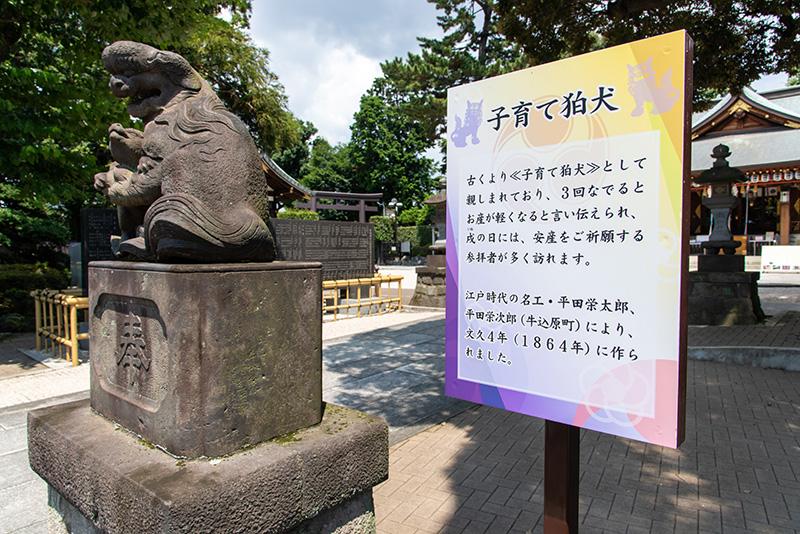 沼袋氷川神社 子育て狛犬