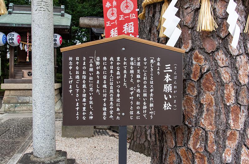 沼袋氷川神社 三本願い松案内