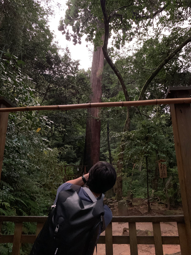 八重垣神社 大杉の跡