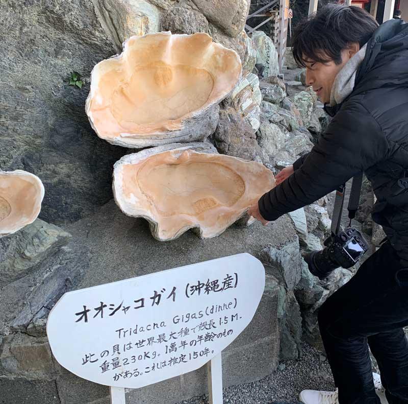 二見興玉神社 オオシャコガイ