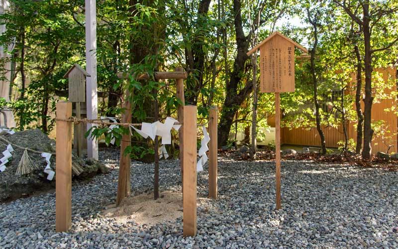 猿田彦神社 招霊の木