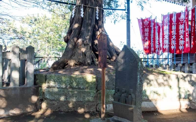 諏訪神社 御神木